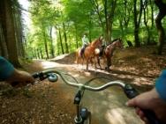 paardrijden-twente