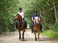 buitenrit-paard-pony_